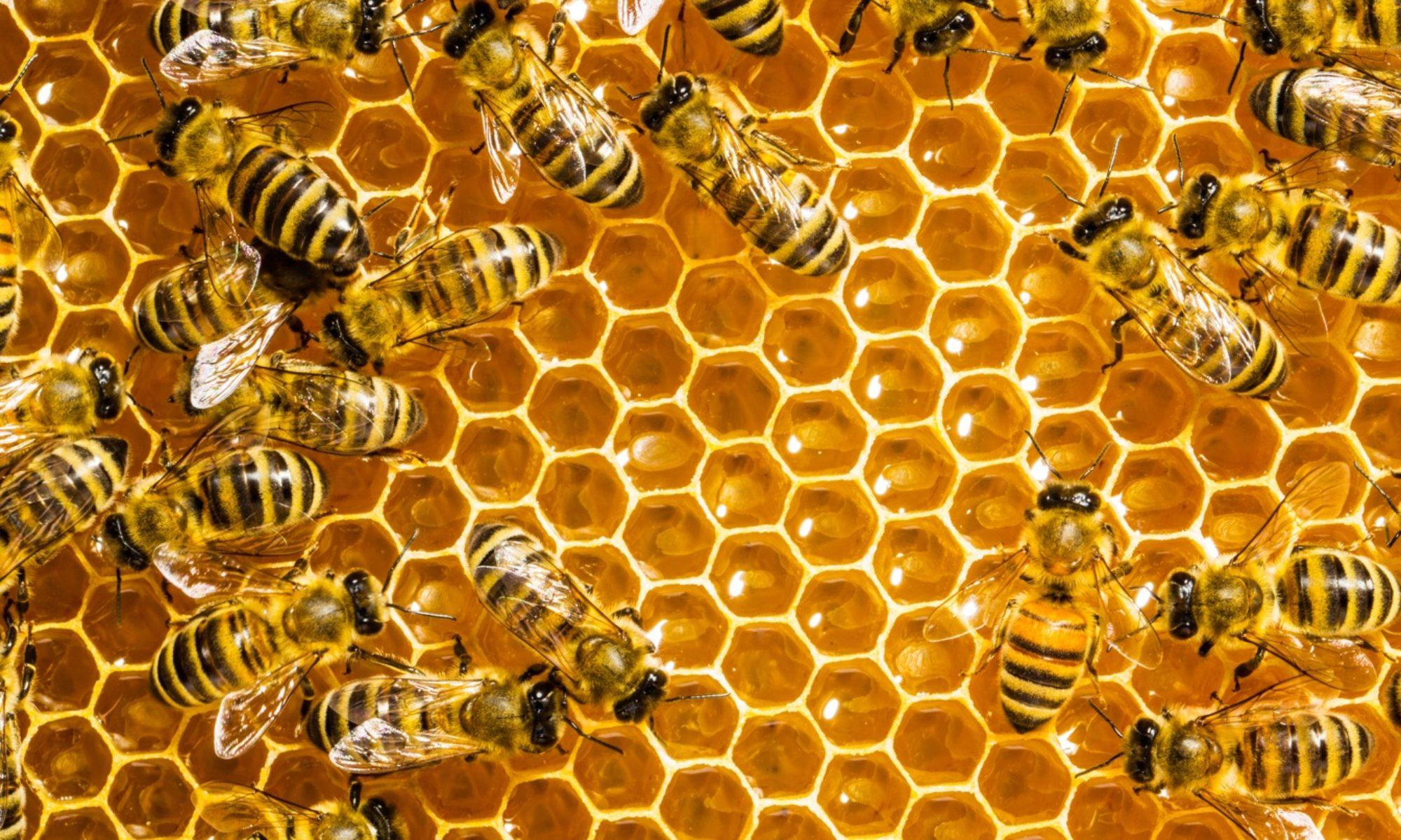 Borsod-Abaúj-Zemplén Megyei Méhész Egyesület